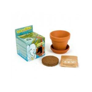 Radis et capucine Pot en terre cuite 8 cm avec graines de Bananier à faire pousser