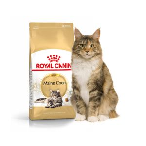 Royal Canin Feline Breed Nutrition Maine Coon 31 Adult - Sac 2 kg
