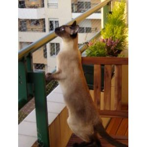 Trixie Filet de protection pour chat 3 x 2 m