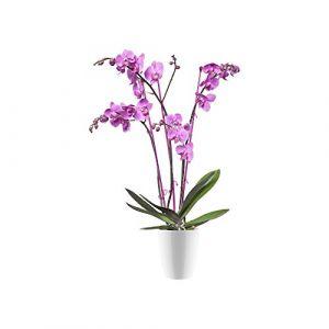 Elho Brussels Diamond Orchidée Haut 15 - Pot De Fleurs - Blanc - Intérieur - Ø 15.7 x H 18.7 cm