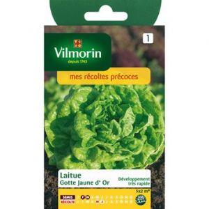 Vilmorin Laitue gotte jaune d'or - Sachet de graines 4 g
