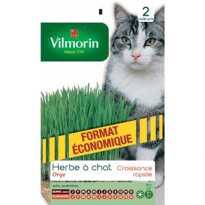 Vilmorin Herbe à chat