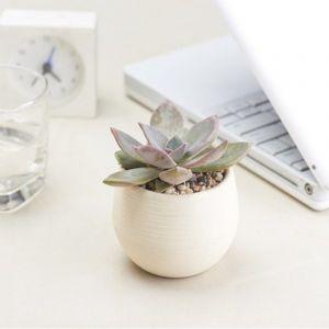 WeWoo Pot de fleur Créative Multi-viande Plantes En Plastique Pots De Élégant Bureau Mini De Fleurs Mini Semis Pépinière Pot, Aléatoire Couleur Livraison