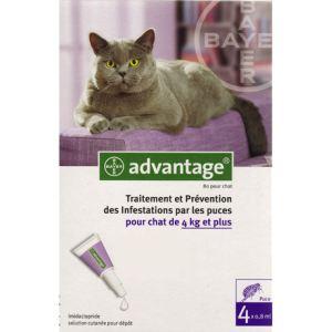 Bayer Advantage 80 pour chat - Traitement et prévention des infestations par les puces pour les chats de 4 kg et plus