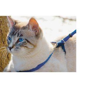 PetSafe Harnais et laisse Easywalk pour chat taille S