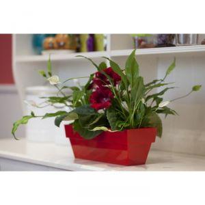 Jardinière en plastique 10 x 25 cm