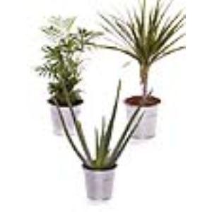 Liste Verte Pack Plantes dépolluantes S