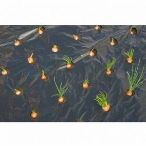 Nature Film de paillage PETITS LEGUMES, Longueur 10 m