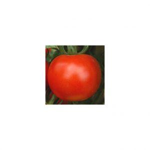 Ferme de Sainte Marthe Tomate Rose de Berne