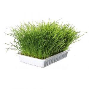 Trixie Malt et herbes pour chat