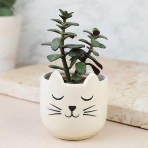 Sass & Belle Sass Belle moustaches de chat Mini pot de fleurs