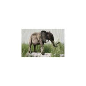 Anima Peluche Éléphant 120 cm