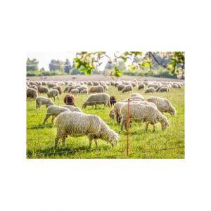 Ako Filet à moutons TopLine simple pointe - Taille: 105 cm