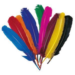 12 plumes d'Indien (20 cm)