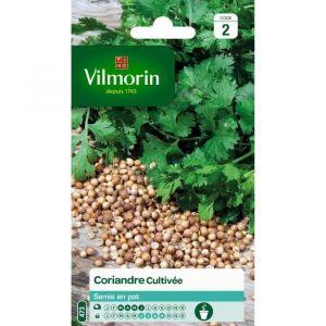 Vilmorin Coriandre cultivée - Sachet graines