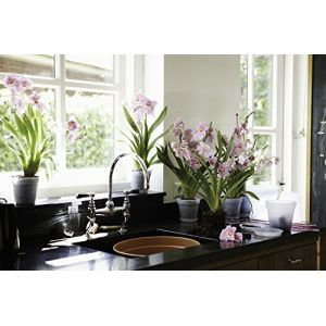 Elho Pot D13 cm provence orchidées transparent