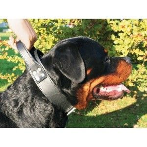 Martin Sellier Collier pour chien double intervention
