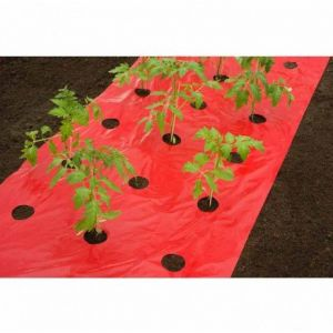 Nature Film de paillage TOMATES 6030260 - Longueur : 10 m Rouge