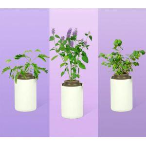 Prêt à pousser Capteur pour plantes CAPSULES NOUVEAUTES PRINTEMPS