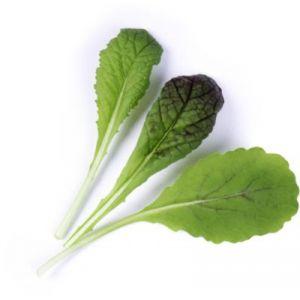 Veritable Capteur pour plantes LINGOT MOUTARDE ROUGE