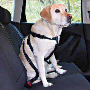 Trixie Ceinture de sécurité pour chiens 50-70 cm