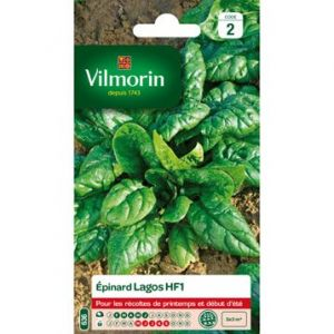 Vilmorin Epinard lagos hf1 semences potageres 15 g