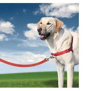 PetSafe Harnais Easy Walk taille L