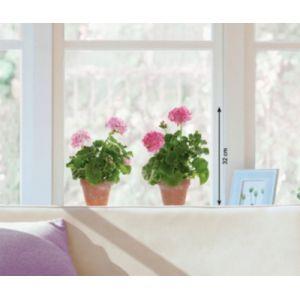 Nouvelles images Sticker fenêtre géranium rose
