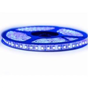 Image de SysLED Kit Ruban Professionnel 3528 - 120 leds/m - 5 mètres bleu anti-éclaboussure (IP65) | Longueur: 5 mètres - Transformateur: Alimentation Inclus