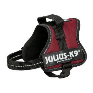 Julius K9 Harnais Power Mini/M pour chien