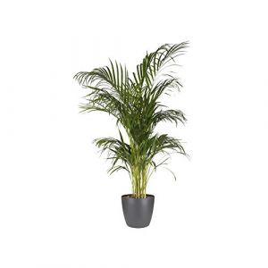 Elho Pot de fleurs - brussels rond 30cm anthracite - 29.4 x 29.4 x 27.4 cm
