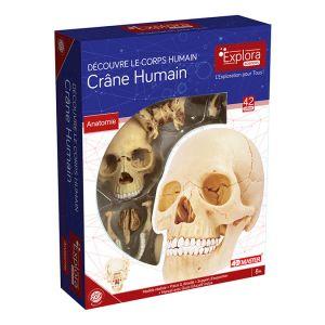 Mgm Explora - Anatomie crâne humain - Expérience anatomie