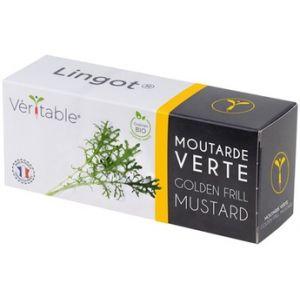 Veritable Capteur pour plantes LINGOT MOUTARDE VERTE