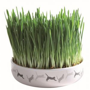 Trixie Ecuelle ceramique pour herbe a chat + 50 g de graines