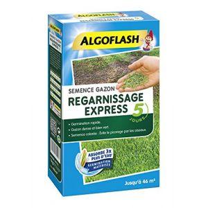 Algoflash Semences gazon regarnissage express - 1 Kg - Mélange spécialement conçu pour réparer les trous et imperfections du gazon - 1 Kg