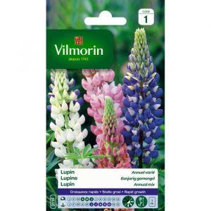 Vilmorin Lupin annuel en mélange - Sachet de graines