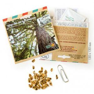 Radis et capucine Graines de Séquoia de Californie