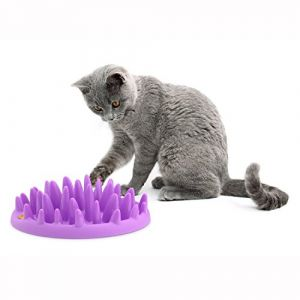The Company of Animals Gamelle Interactif Catch pour Chat