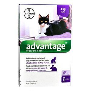 Bayer Advantage 80 - Pipettes pour Chats (plus de 4 Kg)