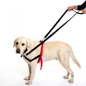 Halti - Laisse d'éducation pour chien