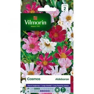 Vilmorin Cosmos aldebaran blanc à rose vif
