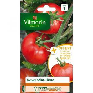 Vilmorin Tomate saint pierre