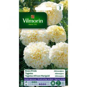 Vilmorin Rose d'Inde Kilimandjaro blanche - Coloris blanc crème. Floraison longue et abondante.