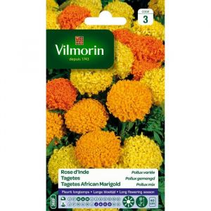 Vilmorin Rose d'Inde Pollux variee