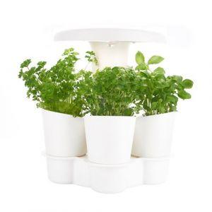 Potager d'intérieur intelligent Calla pour plantes aromatiques