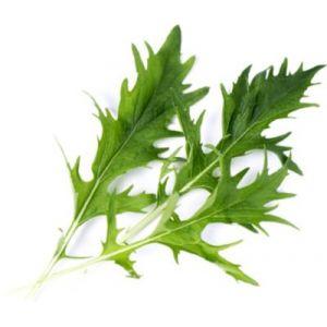 Veritable Capteur pour plantes LINGOT MIZUNA