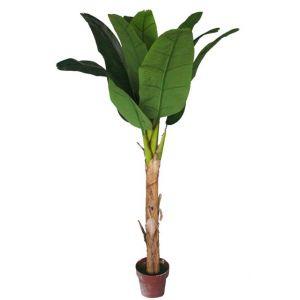 Bananier comparer 376 offres - Bananier en pot ...