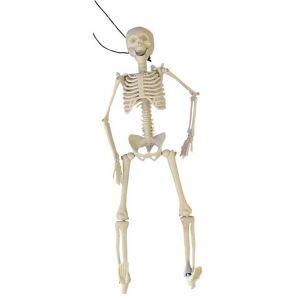 Squelette articulé 3D (40 cm)