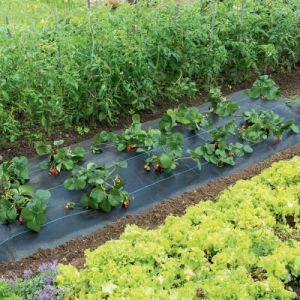 """Nortene Paillage spécial fraises """" Fresasol"""" - 1,50 x 5 m"""