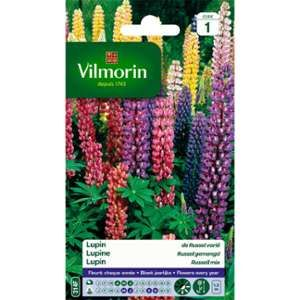 Vilmorin Lupin de russel fleur multicolore